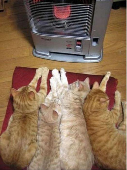 Οι καλύτεροι τρόποι για να κτυπήσει το κρύο του χειμώνα (46 pics)