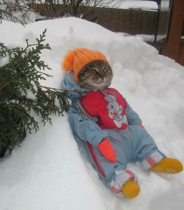 The Best Ways To Beat The Winter Cold (46 pics)