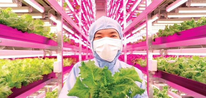 This Japanese Scientist Has Created An Amazing Indoor Farm (7 pics)