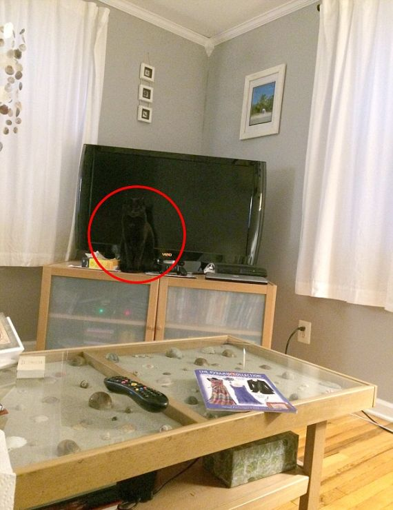 This Cat Is Now A Hide And Seek Champion (3 pics)