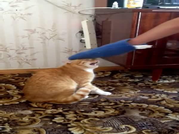 Hilarious Cat's Revenge