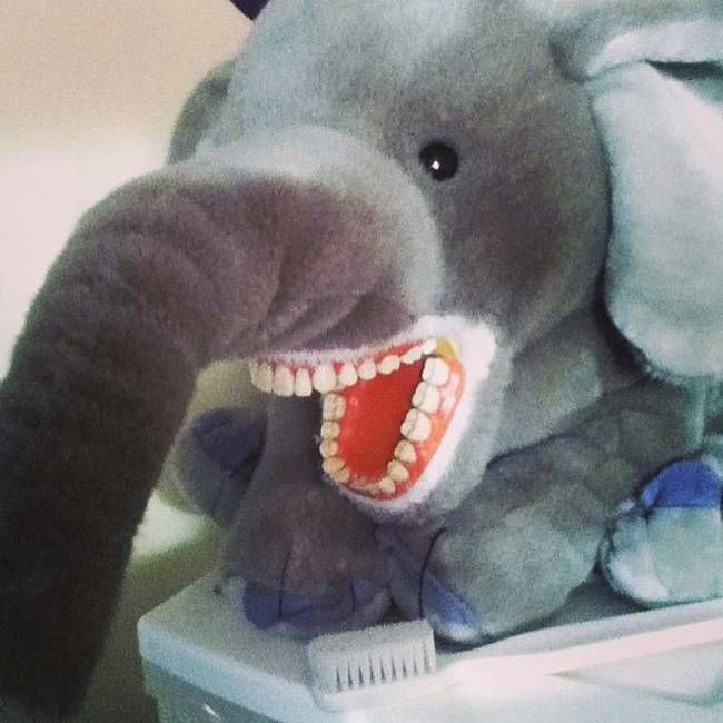 This Is What Dentists Use To Practice (14 pics)