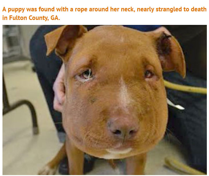 Someone Did Something Terrible To This Puppy, Luckily She Survived (5 pics)