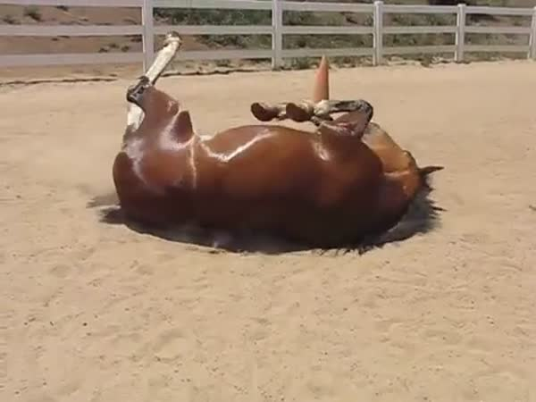 Horse Does The Biggest Farts Youve Ever Heard