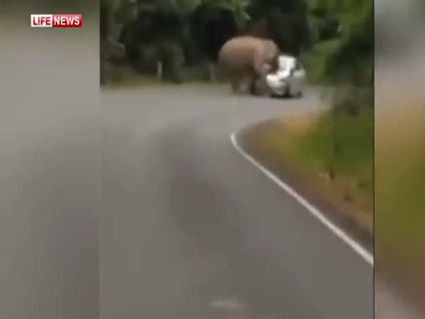 Mad Elephant Destroys Car