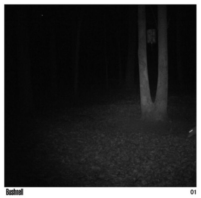 Deer Get Caught Doing It On Camera (4 pics)