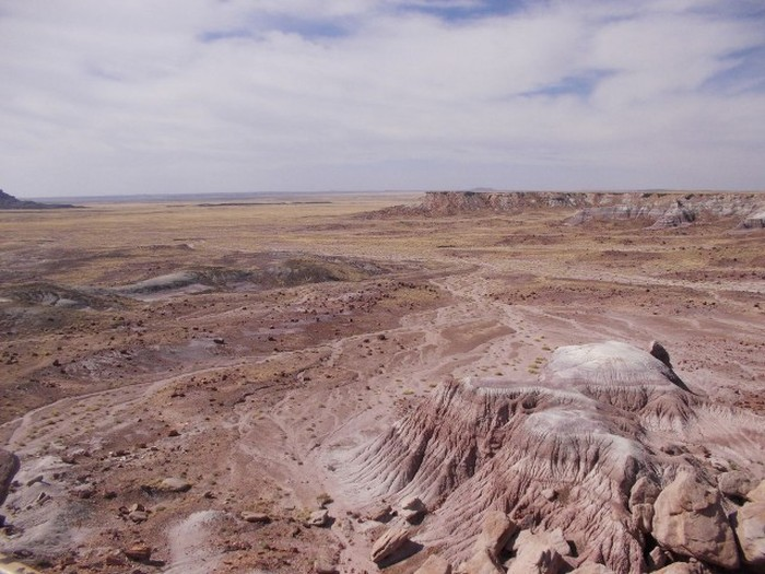 Welcome To The Petrified Forest (20 pics)
