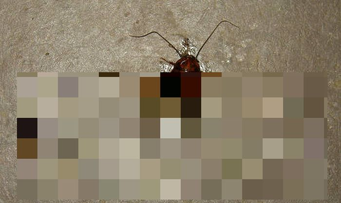 This Man Stepped On A Cockroach And Found Something Even Worse (4 pics)
