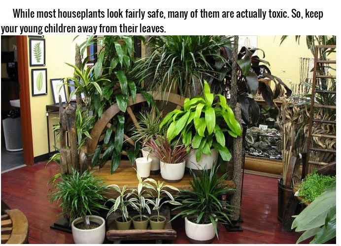 12 Normal Household Items That Could Possibly Kill You (12 pics)