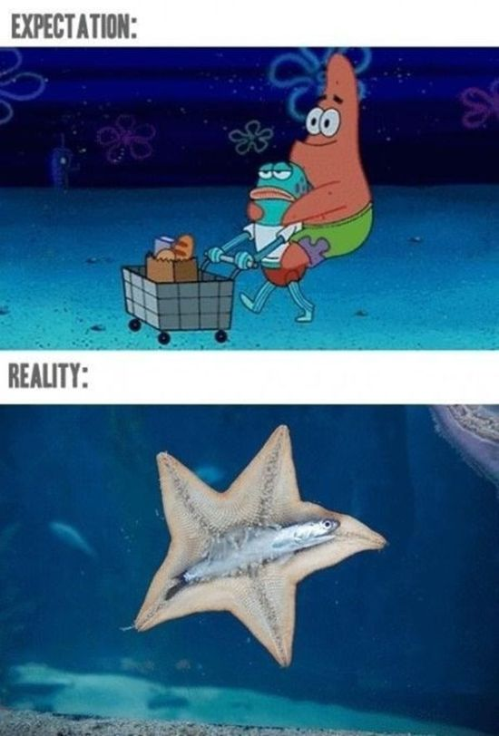 Why Expectation Always Beats Reality Every Time (27 pics)