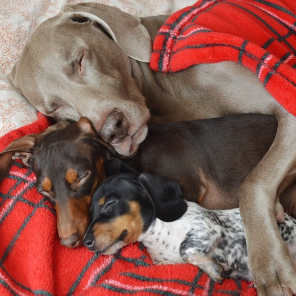 Harlow And Indiana Add A New Puppy To Their Doggie Duo (15 pics)