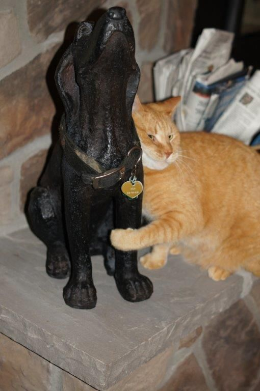 The Cat Reacts To Statue Of A Dead Dog