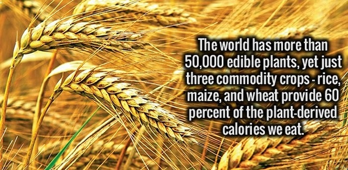 More Fun Facts Your Brain Wants To Know (34 pics)