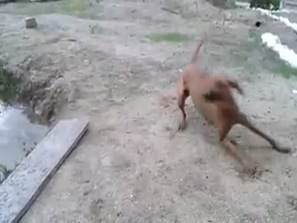 This Dog Can Save Your Life