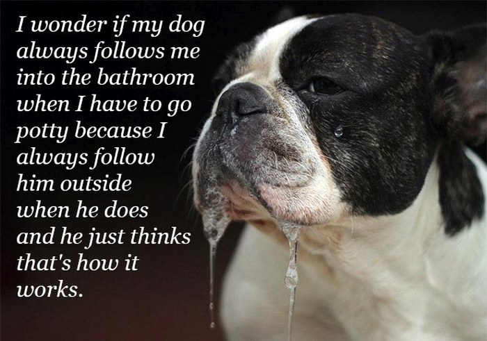 Funny Quotes Over Pictures Of Drooling Animals (14 pics)