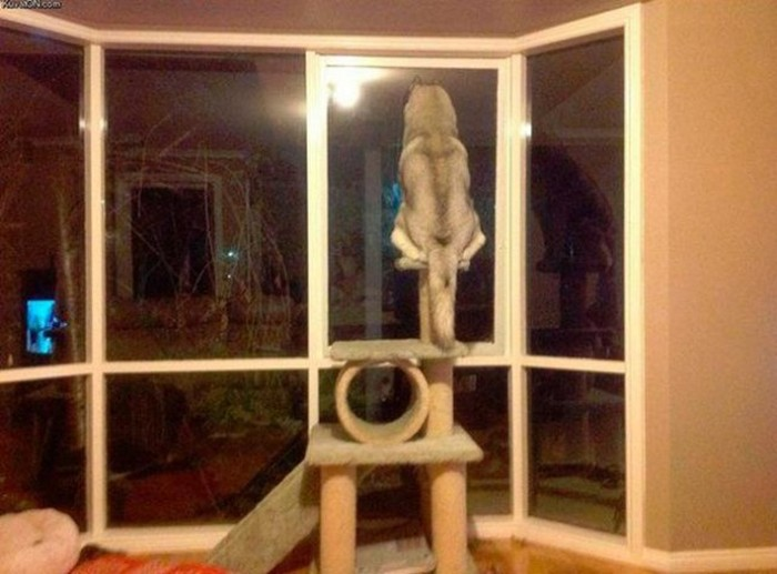 Dogs That Clearly Think They're Cats (22 pics)