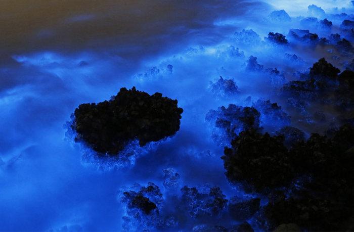 Bioluminescent Plankton On The Shores Of Hong Kong (4 pics)