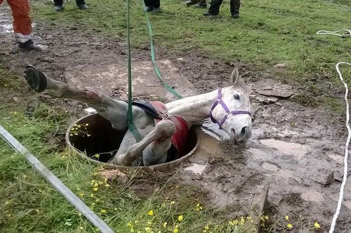 Stuck Horse Gets Rescued From A Well (5 pics)