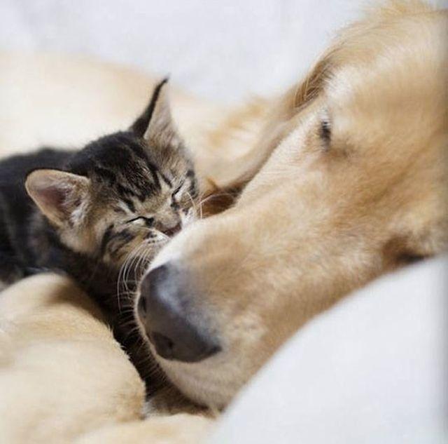 Unlikely Best Friends (8 pics)