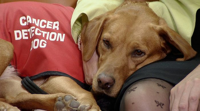 Daisy The Cancer Detection Dog Has Saved Over 550 Lives (6 pics)