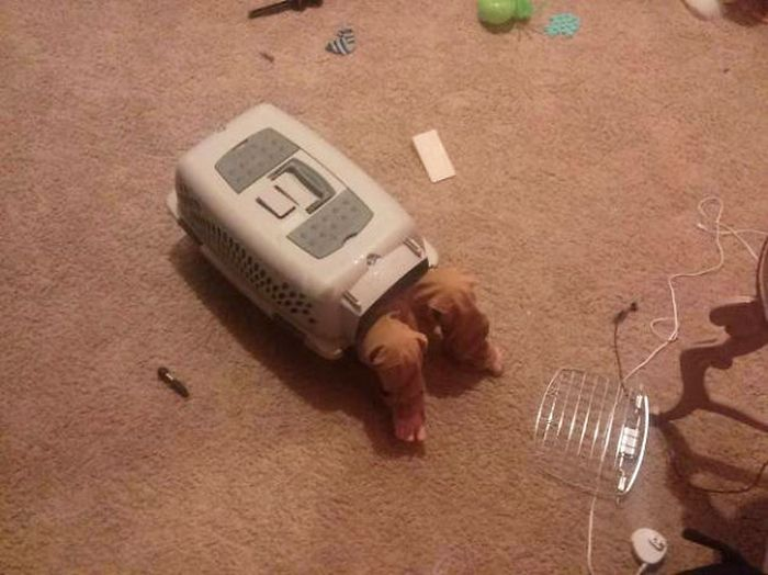 These Kids Obviously Think They're Animals (20 pics)