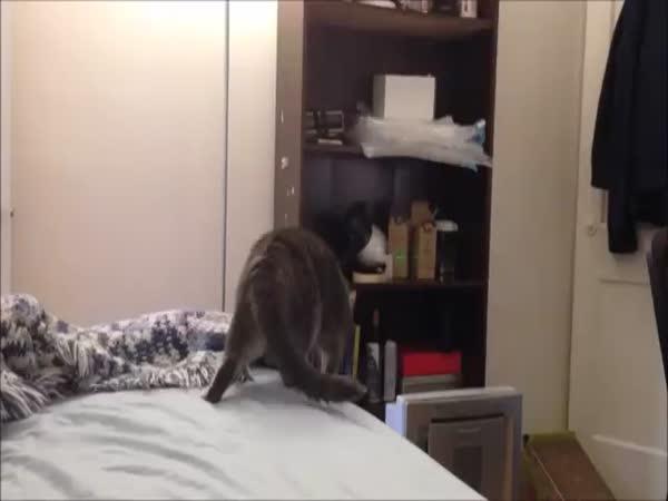 Cats Go Crazy