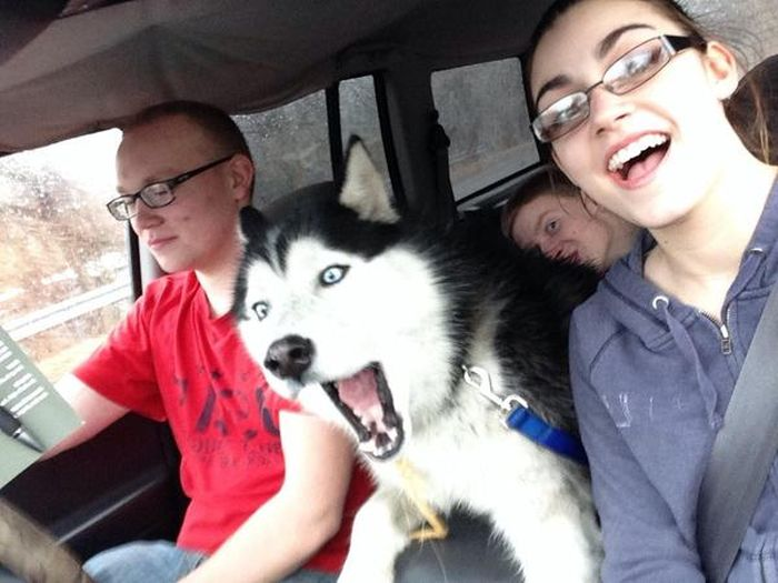 These Animals Just Want To Take A Selfie (20 pics)