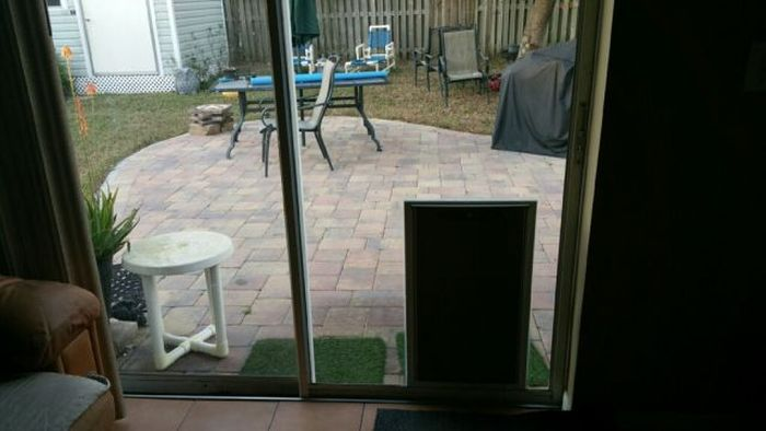 Things Didn't Work Out So Well For This Doggy Door (3 pics)