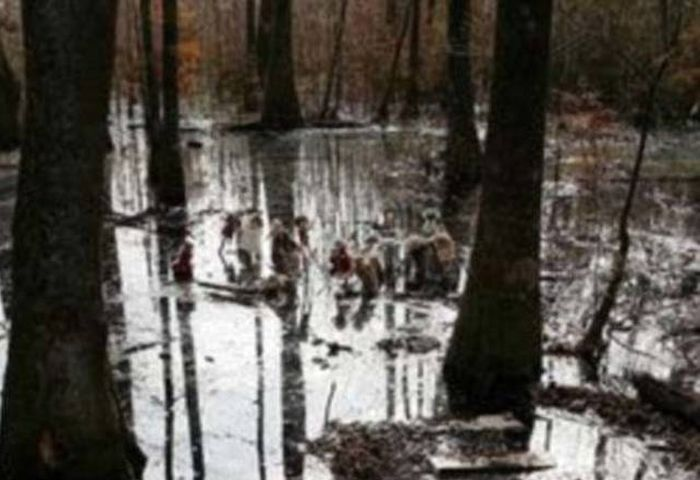 What Cops Discovered In This Swamp Is Strange And Bizarre (5 pics)