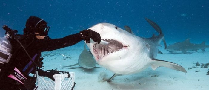 Inside The Mouth Of A Shark (11 pics)