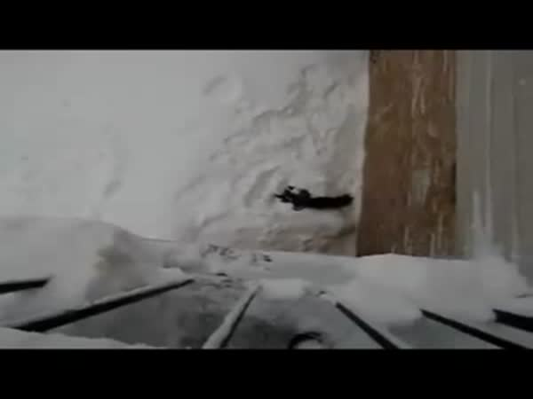 Cat Jumps Into Snow