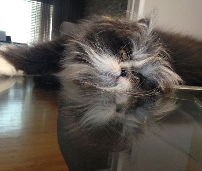 Atchoum Is A Cat With The Most Evil Death Stare (20 pics)