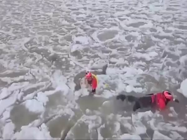 US Coast Guard Saving A Dog From A Frozen River