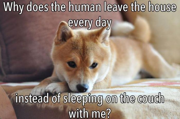 The Truth About What Your Dog Is Thinking (23 pics)