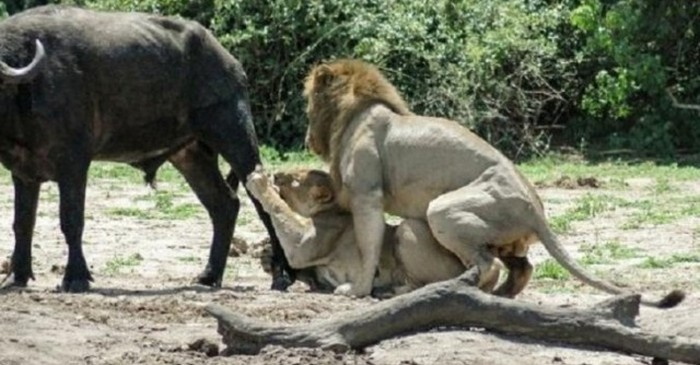 This Is Probably The Wrong Time For Some Wild Loving (3 pics)