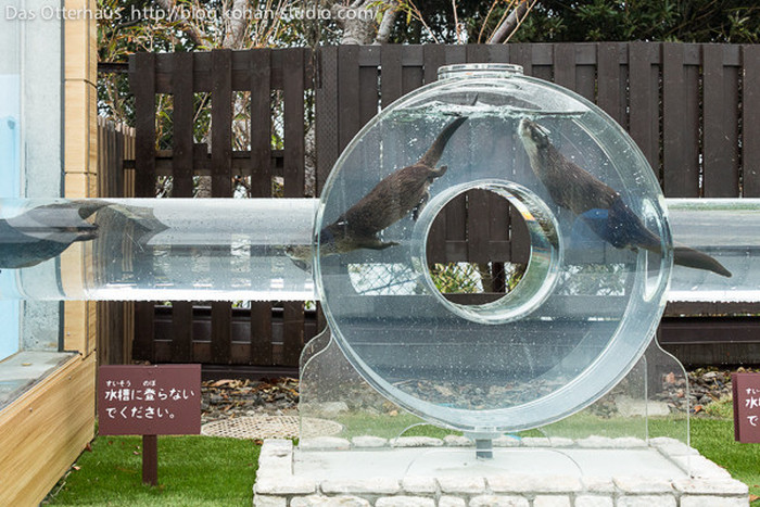 Japanese Zoo Creates Adorable Otter Exhibit (8 pics)