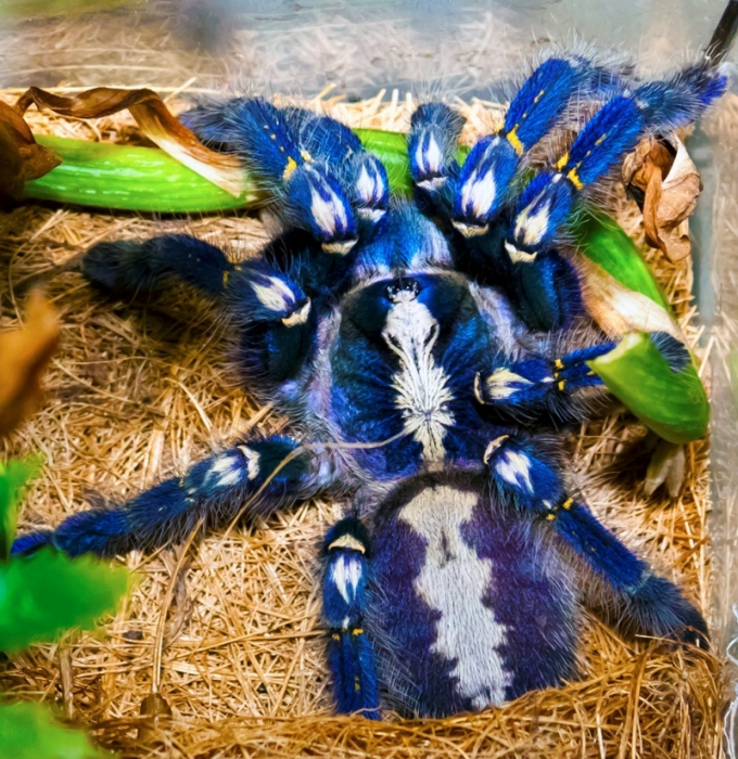 This Spider Is Actually Quite Beautiful (17 pics)
