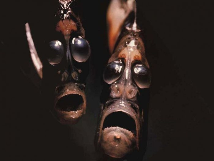 These Aquatic Creatures Are The Stuff Nightmares Are Made Of (14 pics)