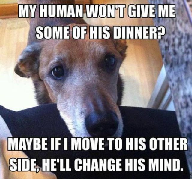 Things That Only Dog Owners Will Be Able To Understand (29 pics)