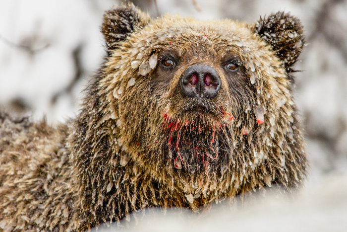 Incredible Wildlife Photos By Paul Nicklen (33 pics)