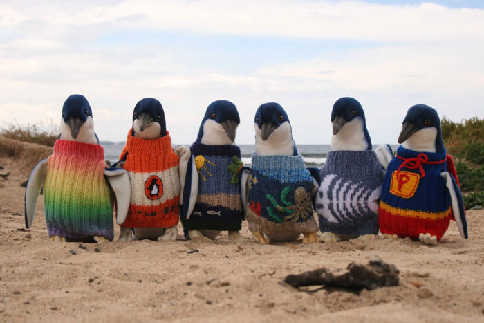 Australia's Oldest Man Likes To Knit Sweaters For Injured Penguins (3 pics)