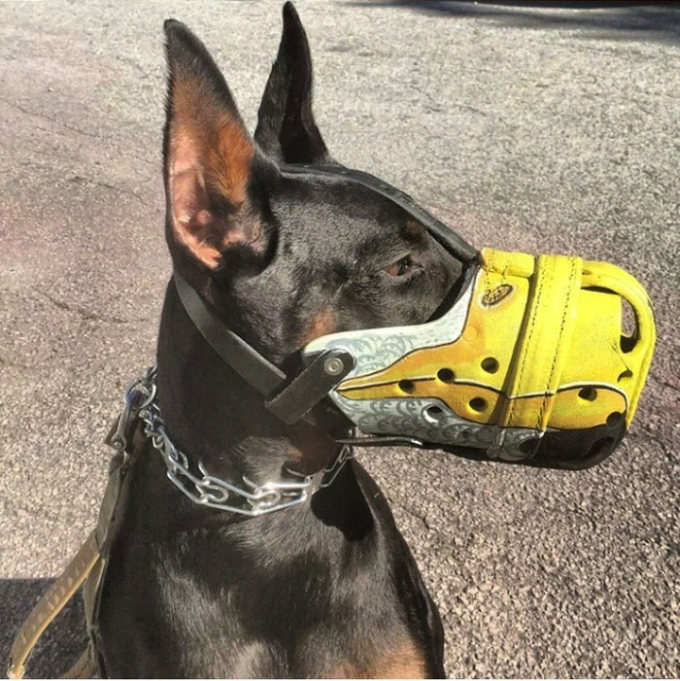 The Most Intimidating Muzzles You Can Buy For Your Dog (18 pics)