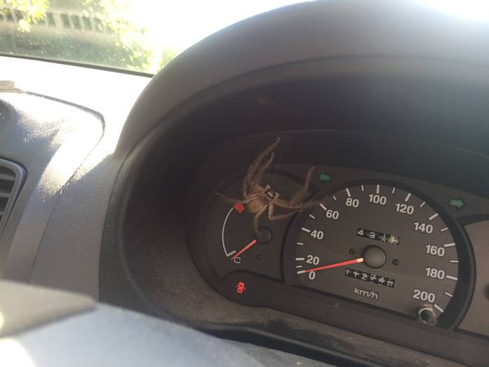This Is Not Something You Want To See When You Get In Your Car (3 pics)