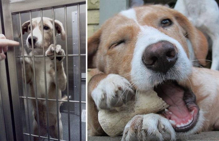 Shelter Animals Before And After They Were Adopted (16 pics)