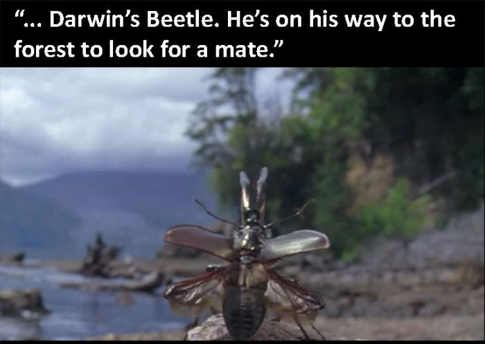 The Beetle Looks For A Mate, A Nature Story (9 pics)