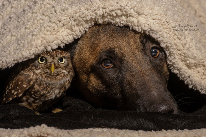 Somehow This Dog And Owl Became Best Friends (14 pics)