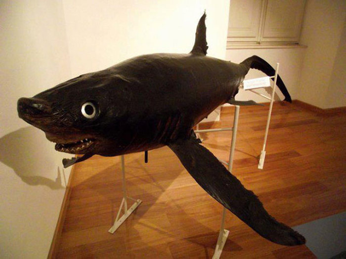 What It Looks Like When Taxidermy Goes Horribly Wrong (23 pics)