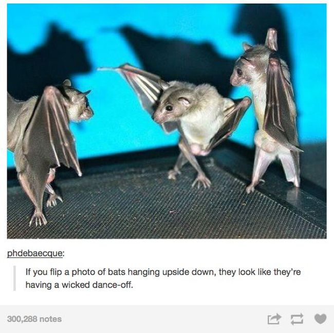 Tumblr Definitely Has The Funniest Posts About Animals (48 pics)