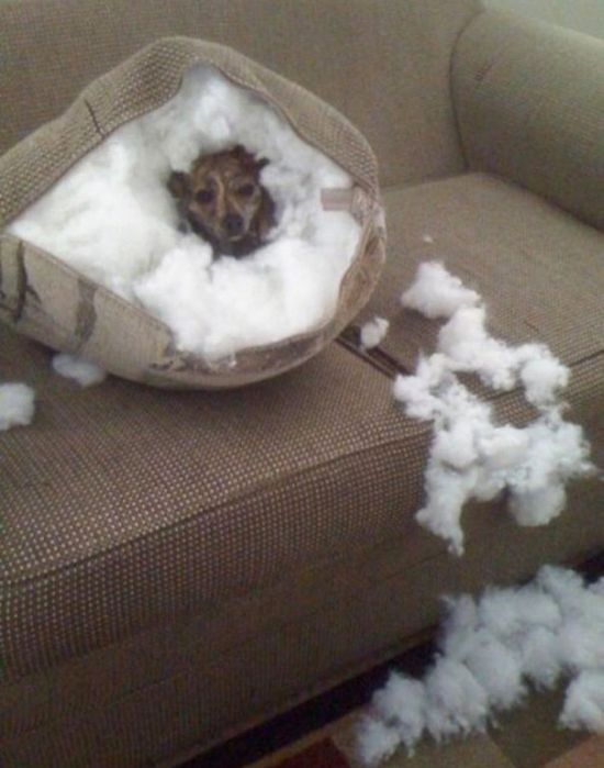 Proof That Dogs Can Be Total Jerks Sometimes (35 pics)