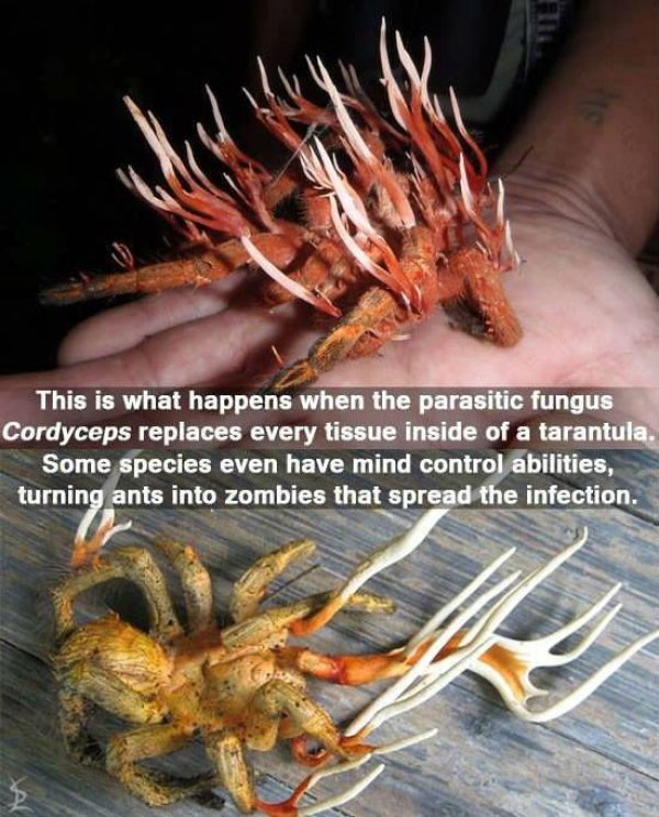 These Are Some Great Reasons To Be Afraid Mother Nature (16 pics)